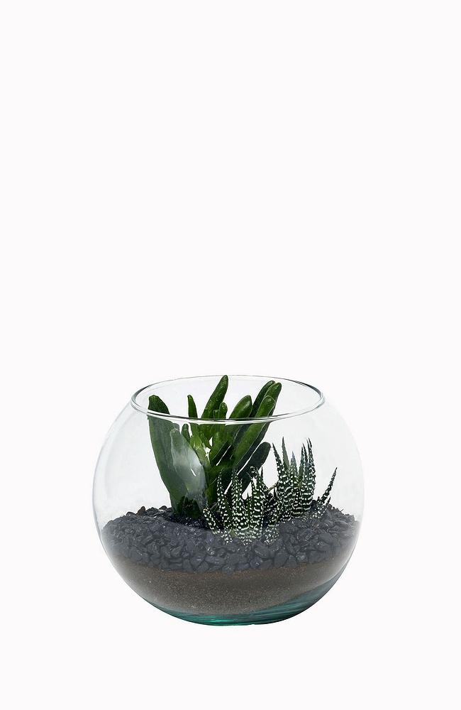 Small Succulent Terrarium Vertuose