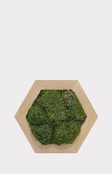 Hexagone de mousses