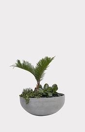 Assiette de succulentes
