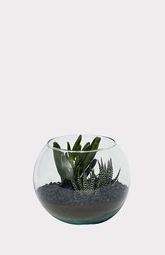 Petit terrarium de succulentes