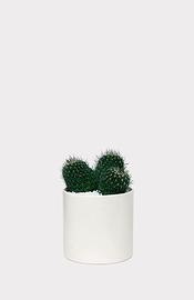Cactus en pot cylindrique blanc