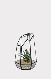 Haworthia terrarium oblique