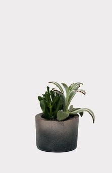 Petit jardin de succulentes