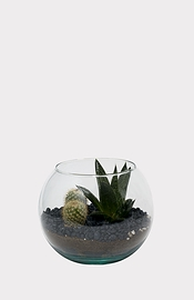 Petit terrarium de succulentes et de cactus