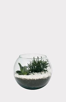 Terrarium moyen de succulentes