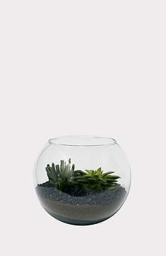 Grand terrarium de succulentes
