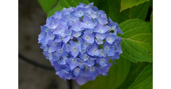 Bouquet pour homme un vent de fra cheur for Bouquet de fleurs homme