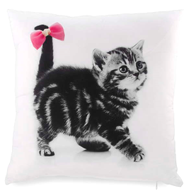 Coussin, Chaton gris