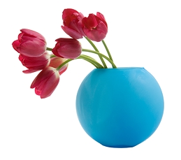 Red tulip in a blue vase