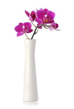 Fleur d'orchidée rose dans un vase blanc