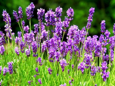 Aromatherapy & DIY
