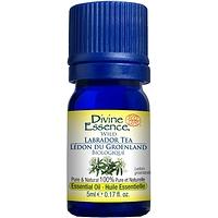 Divine Essence Essential Oil Labrador Tea Wild - Ledum groenlandicum 5 ml
